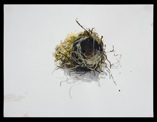 ragged-nest